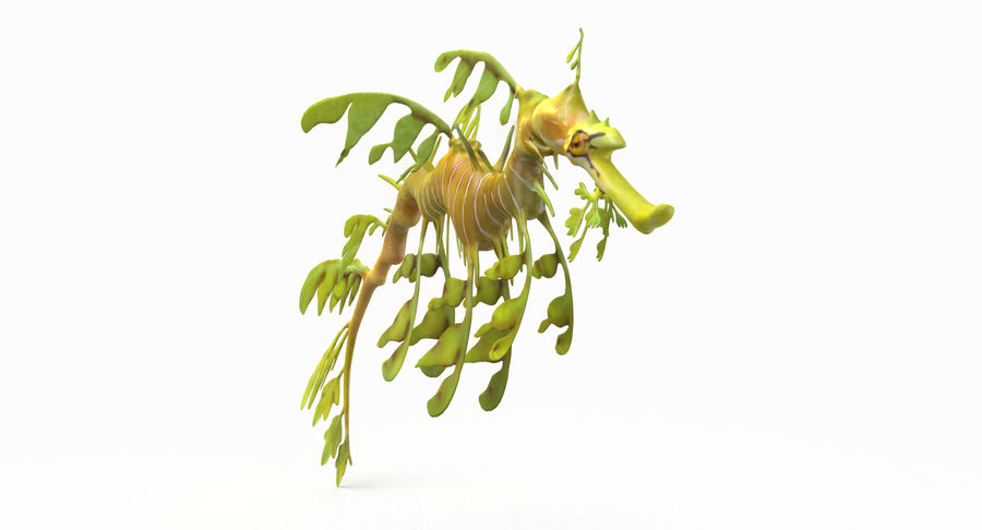 Leafy Sea Dragon royalty-free 3d model - Preview no. 8