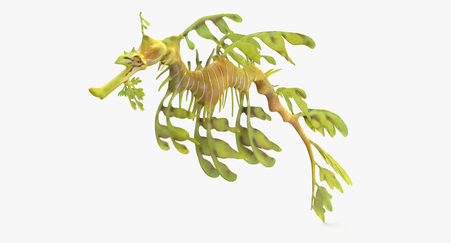 Leafy Sea Dragon royalty-free 3d model - Preview no. 2
