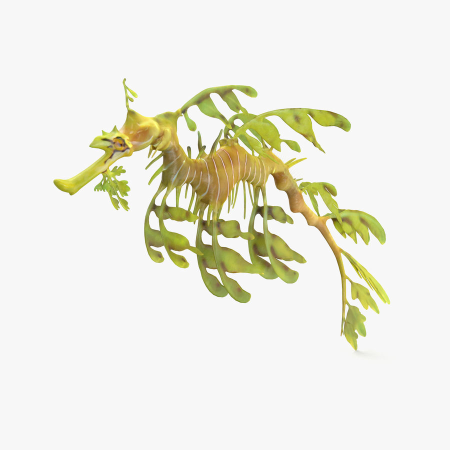 Leafy Sea Dragon royalty-free 3d model - Preview no. 1