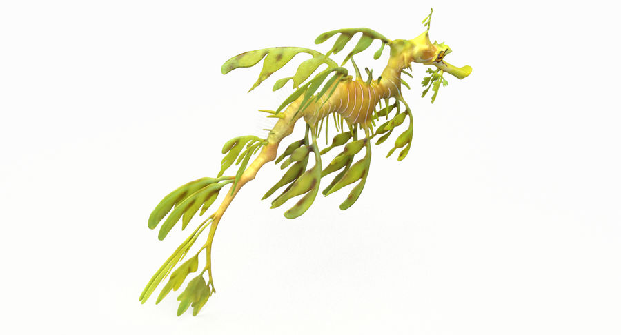 Leafy Sea Dragon royalty-free 3d model - Preview no. 6
