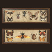Entomologiska bilder - PBR Game Ready 3d model