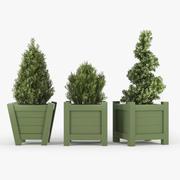 Buxus green pot 3d model