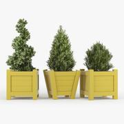 Buxus yellow pot 3d model