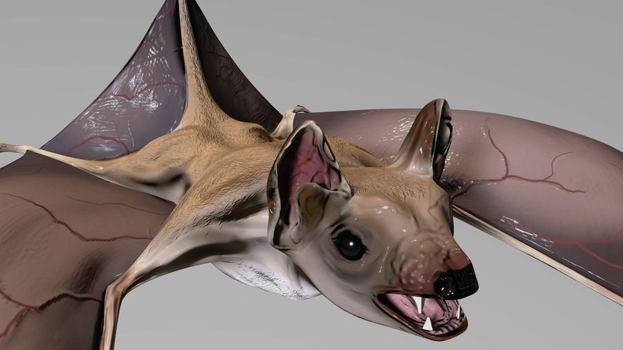 Bat royalty-free 3d model - Preview no. 4