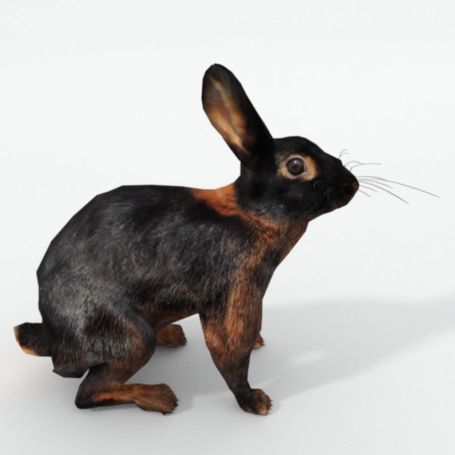 Tan Rabbit royalty-free 3d model - Preview no. 4