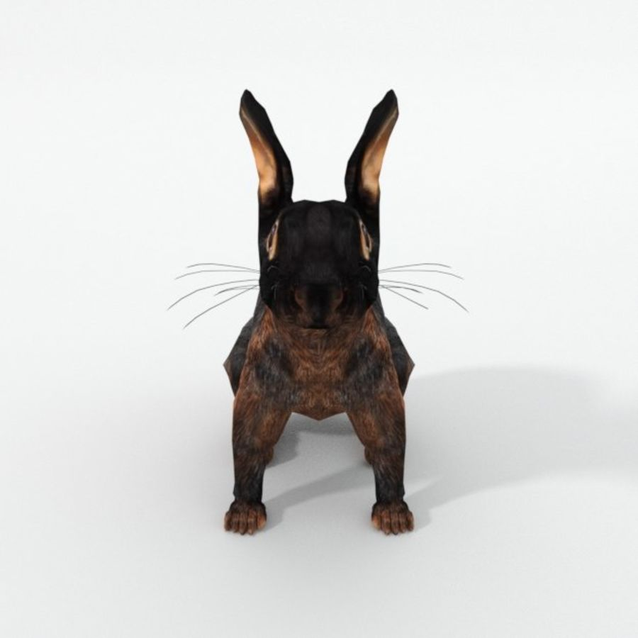Tan Rabbit royalty-free 3d model - Preview no. 3