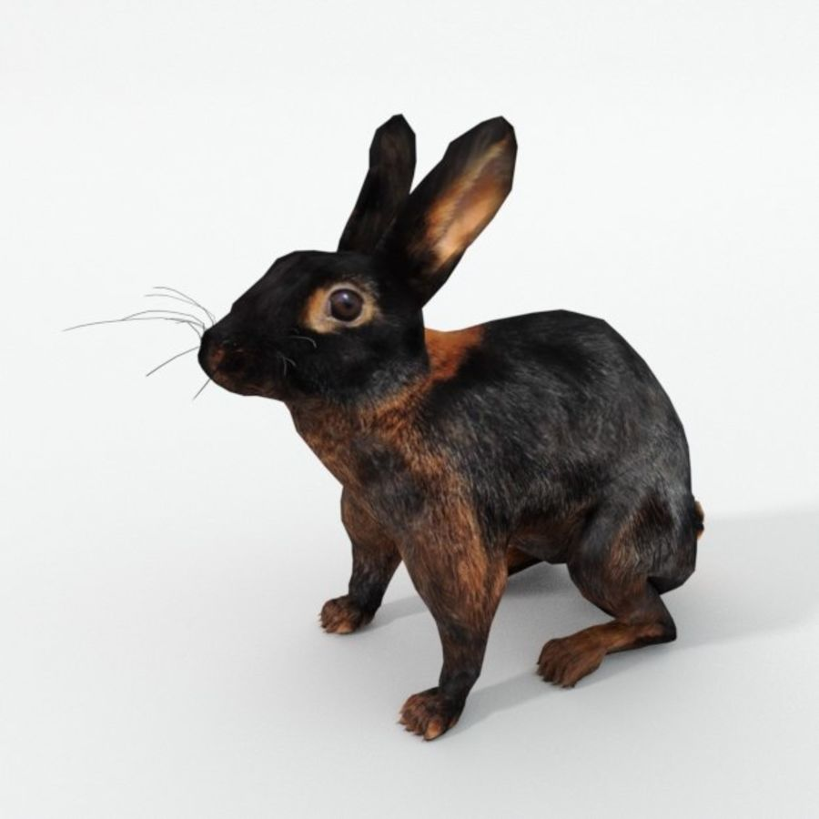 Tan Rabbit royalty-free 3d model - Preview no. 1