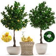 Zitronenbaum mit Obst 3d model