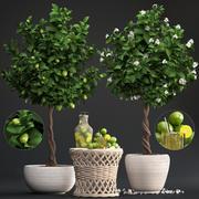 Albero di limone con frutta 3d model
