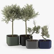 Urbilis Olive 3d model