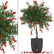 Grenade aux fruits 3d model
