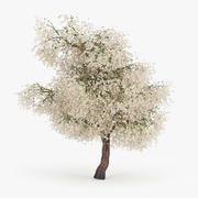 Blommande äpple 3d model