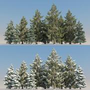 10 + 10 Picea Glauca 나무 3d model