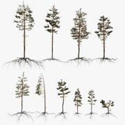 Pine Tree Pack vol.01 3d model