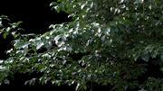 Geanimeerde bomen 3d model