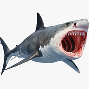 Great Shark White 3d model