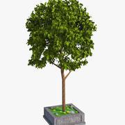 Нормальное дерево 3d model