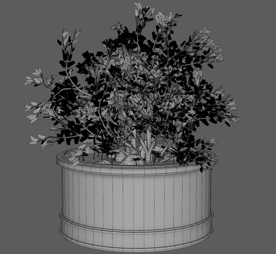 Asian Plant royalty-free 3d model - Preview no. 6