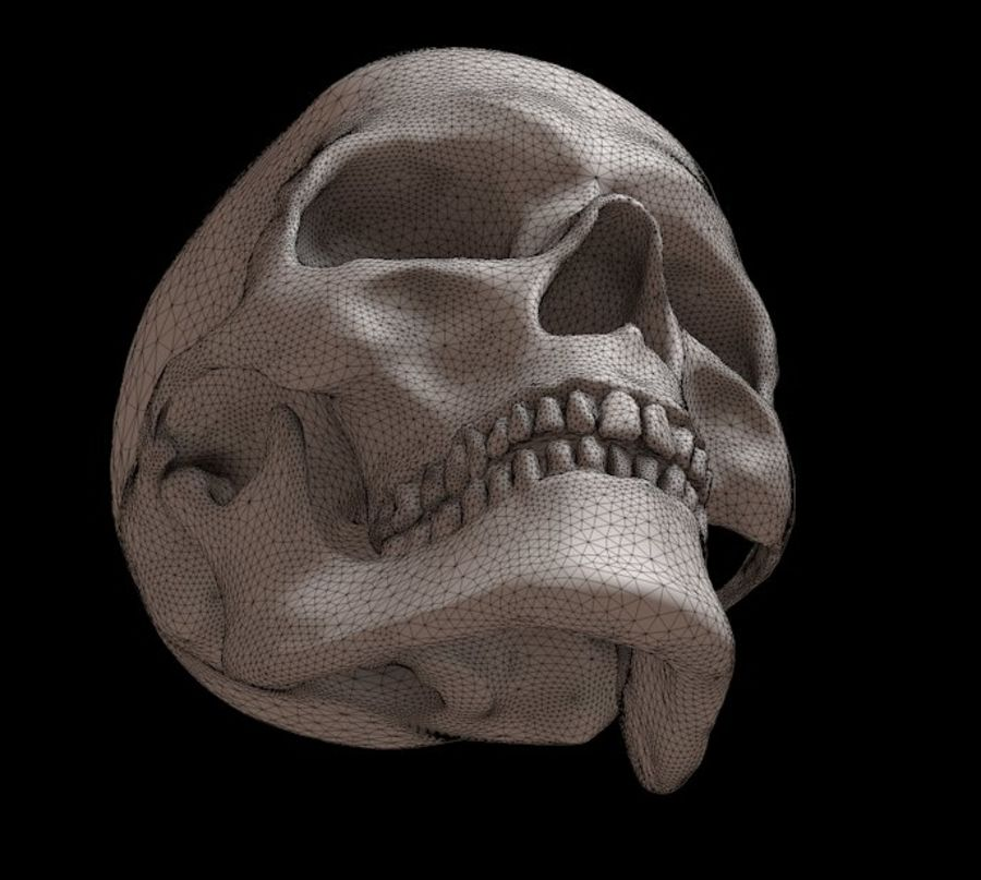 下颌骨的人类头骨 royalty-free 3d model - Preview no. 6