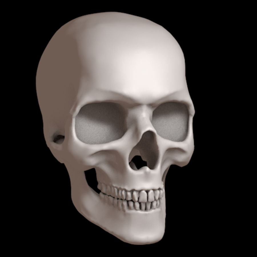 Human skull with jaw royalty-free 3d model - Preview no. 1