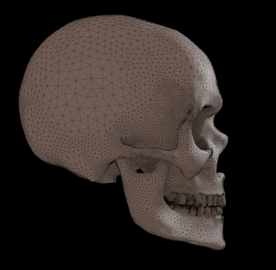 Human skull with jaw royalty-free 3d model - Preview no. 3