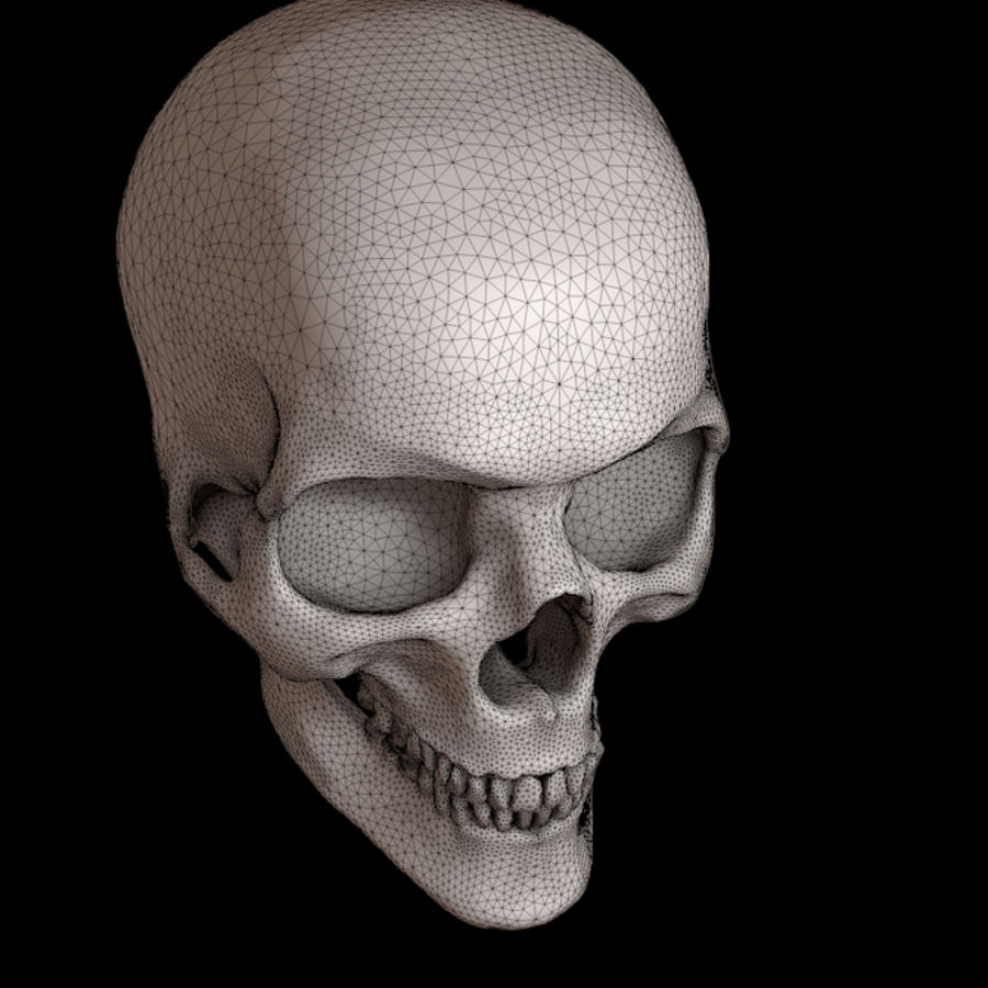Human skull with jaw royalty-free 3d model - Preview no. 4