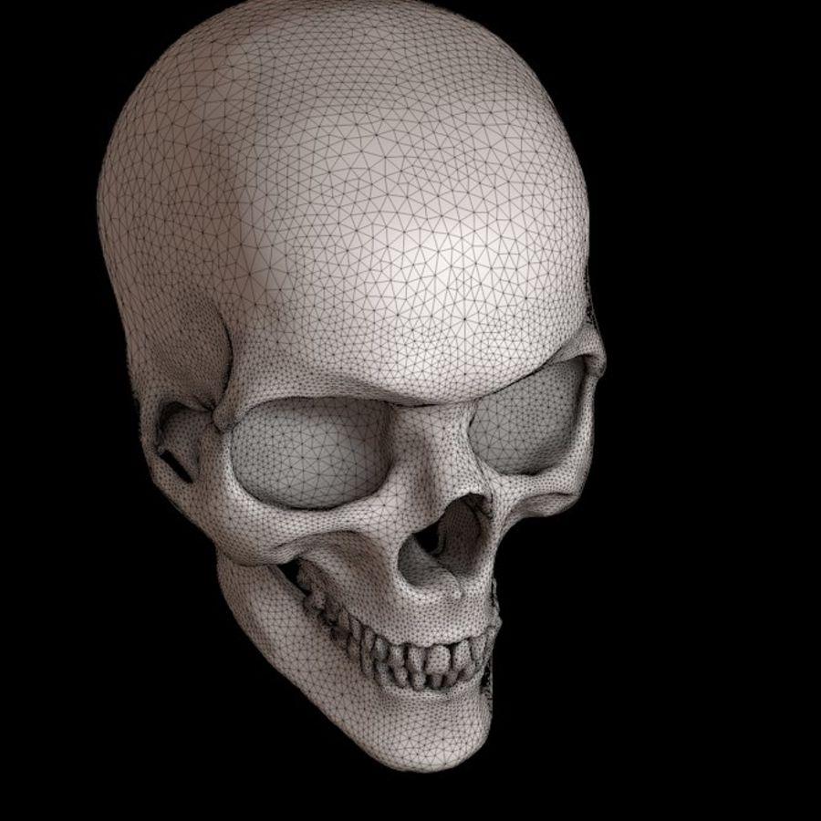 下颌骨的人类头骨 royalty-free 3d model - Preview no. 4