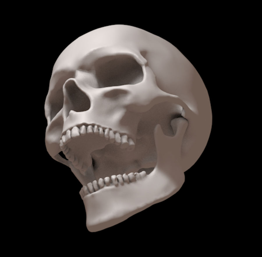 Human skull with jaw royalty-free 3d model - Preview no. 2
