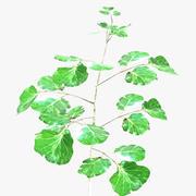 Planta ornamental 002 3d model
