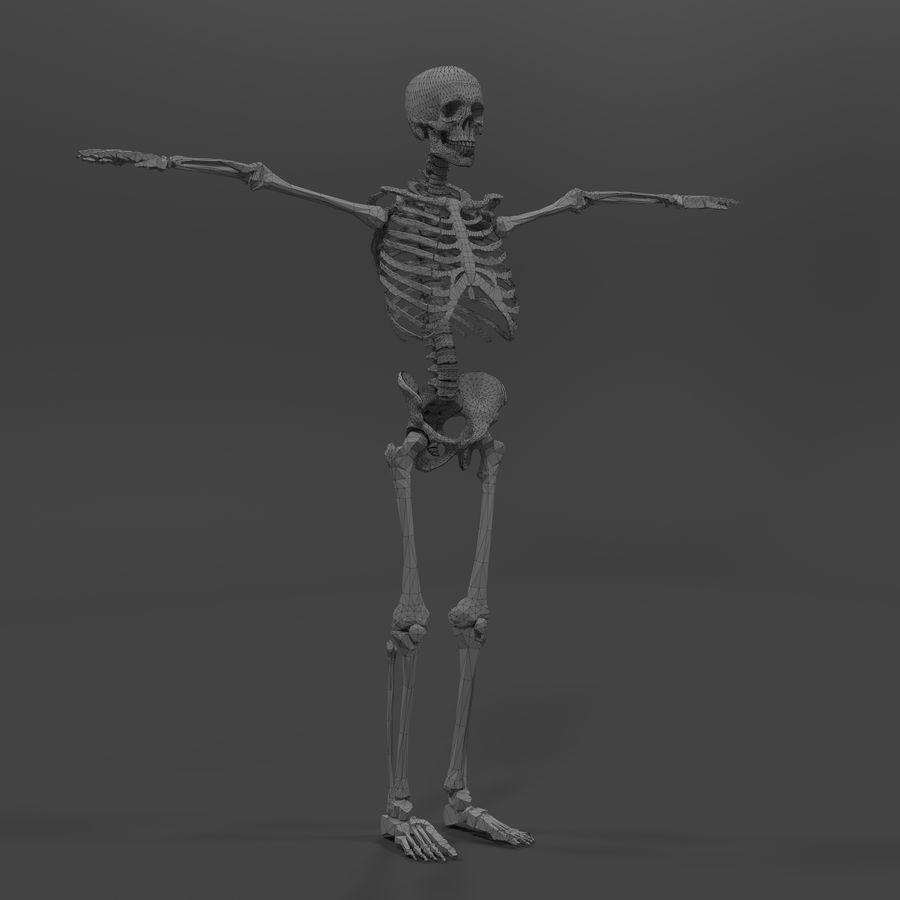 Szkielet człowieka royalty-free 3d model - Preview no. 17