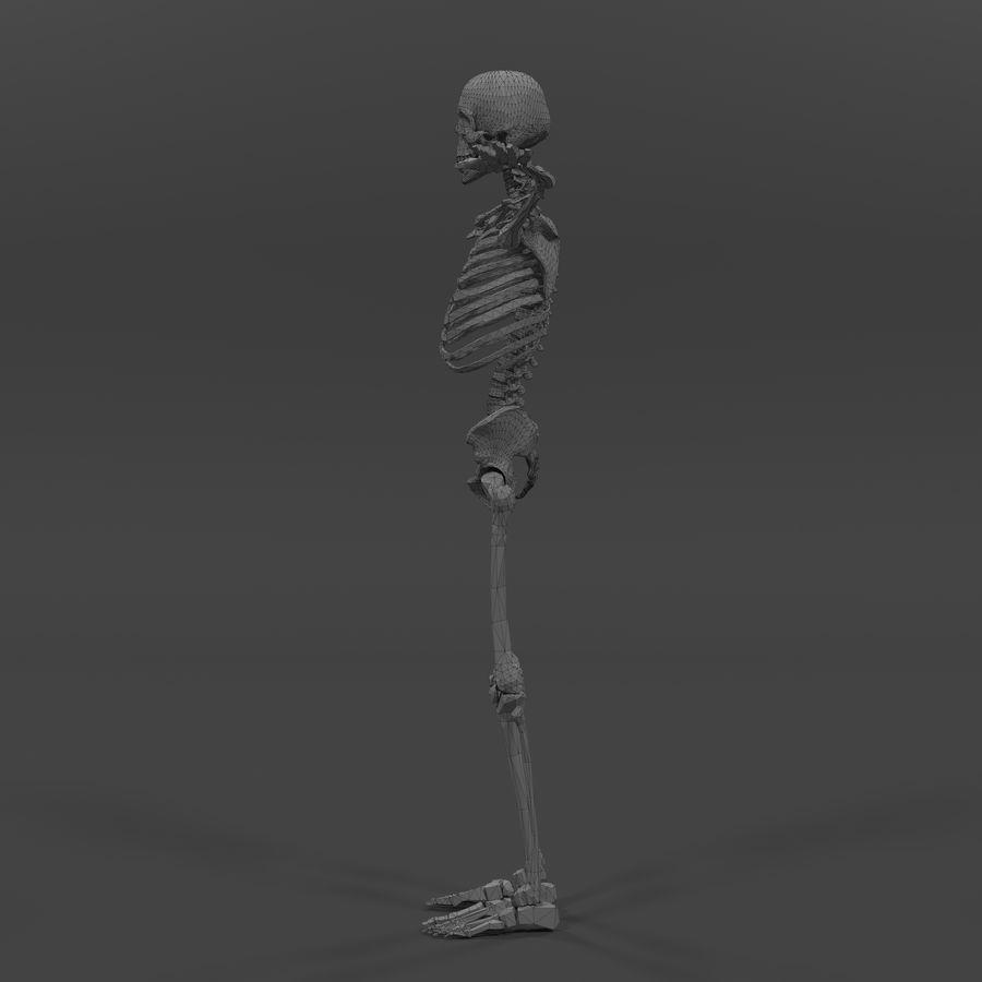 Szkielet człowieka royalty-free 3d model - Preview no. 14