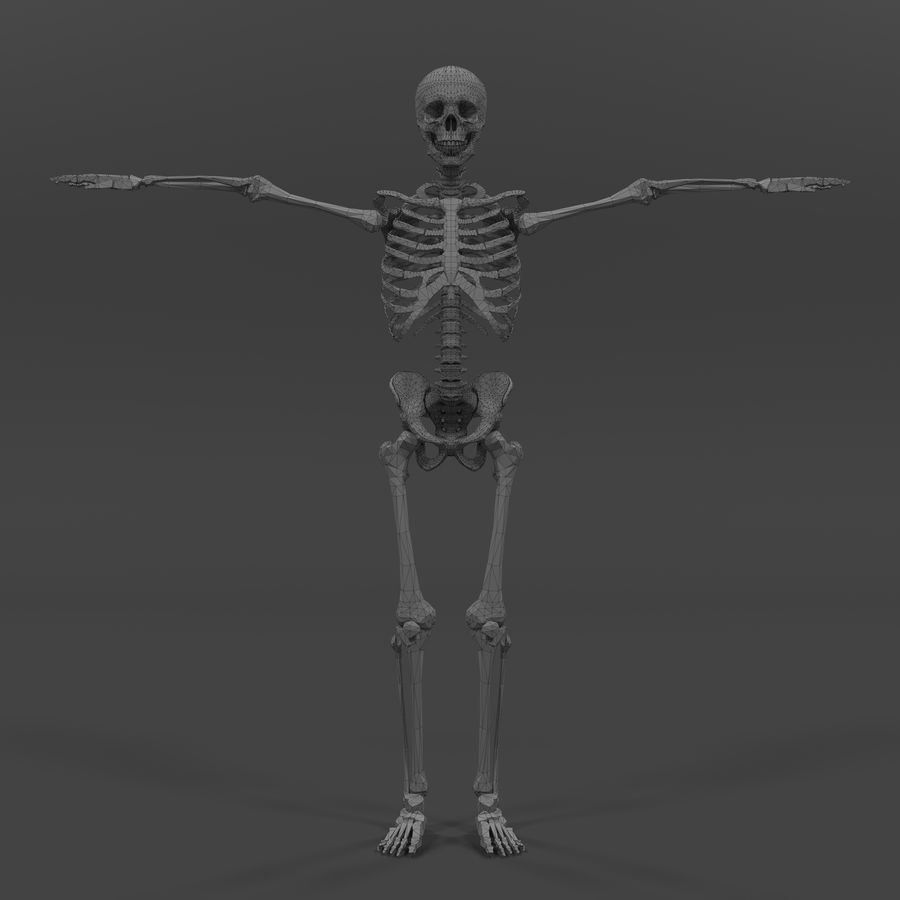 Szkielet człowieka royalty-free 3d model - Preview no. 18