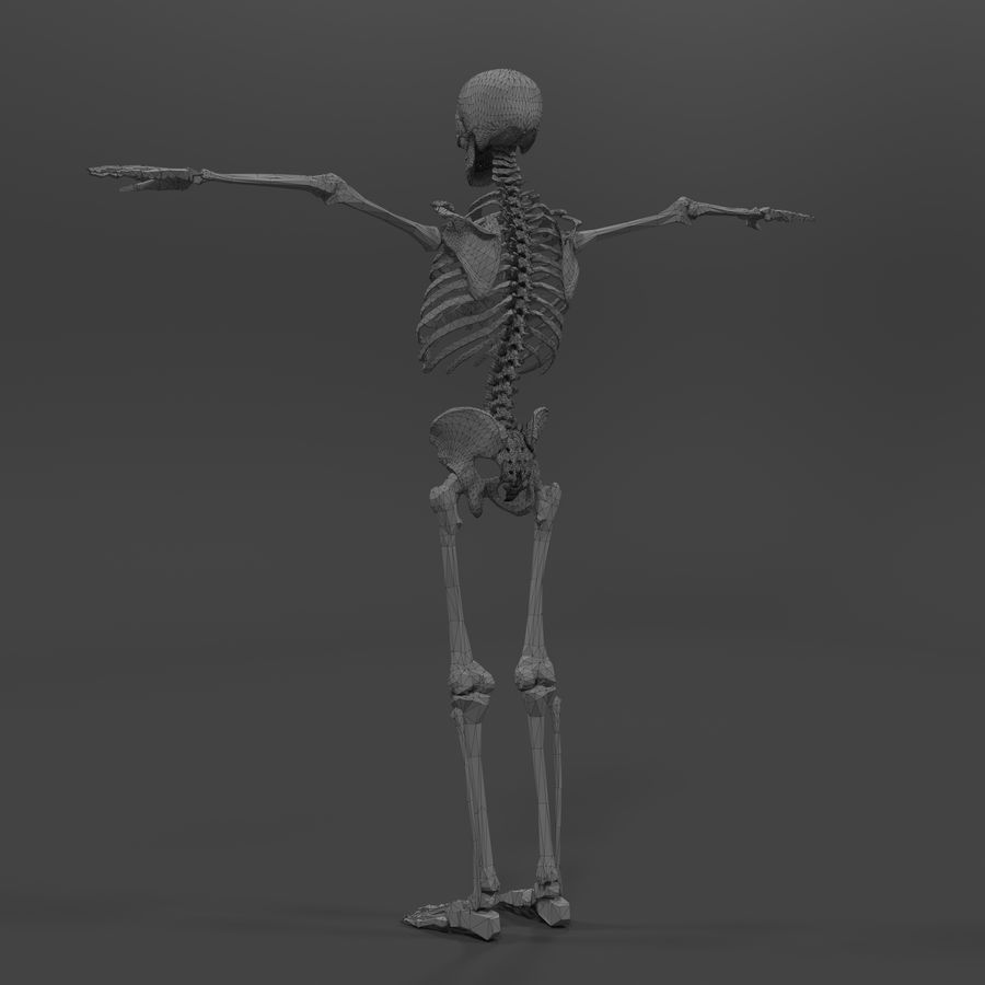 Szkielet człowieka royalty-free 3d model - Preview no. 15