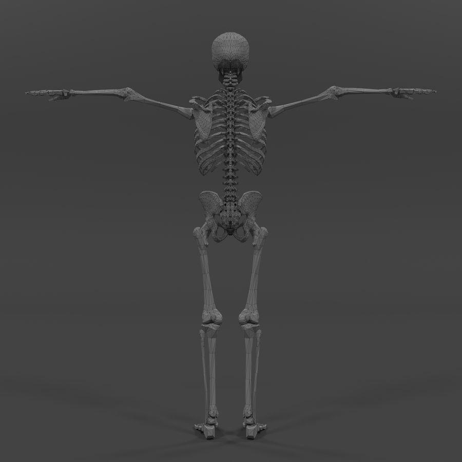 Szkielet człowieka royalty-free 3d model - Preview no. 16
