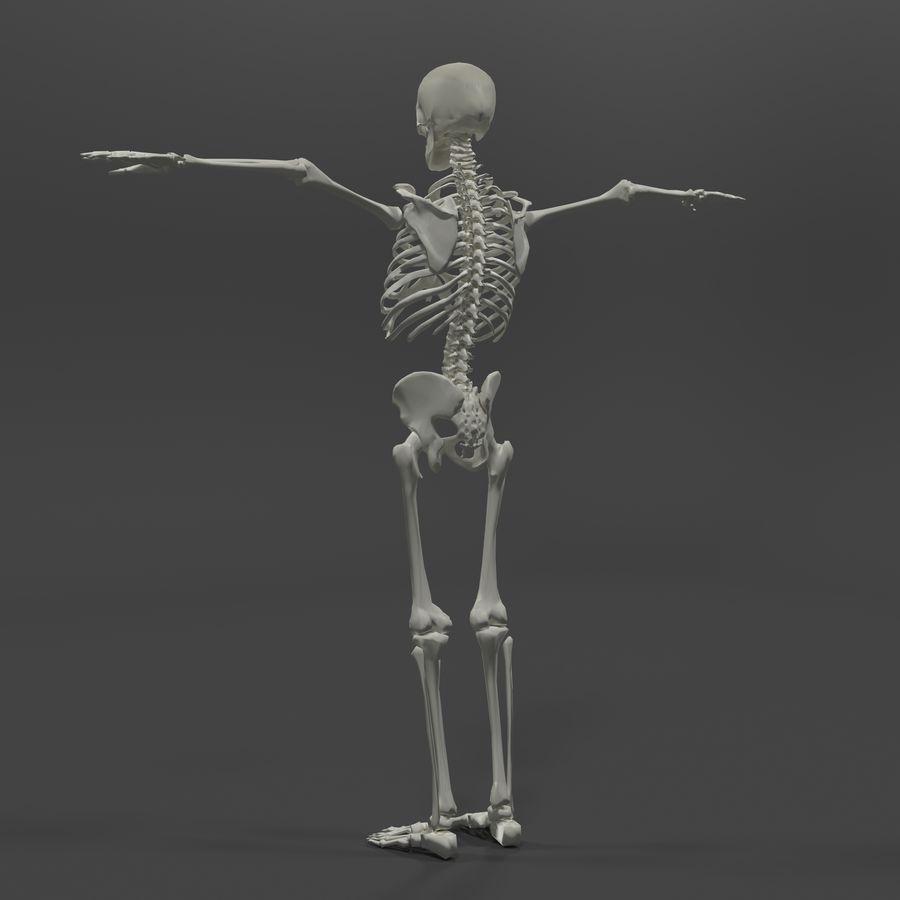 Szkielet człowieka royalty-free 3d model - Preview no. 3