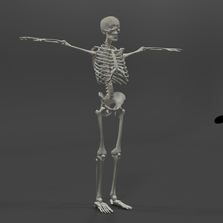 Szkielet człowieka royalty-free 3d model - Preview no. 5