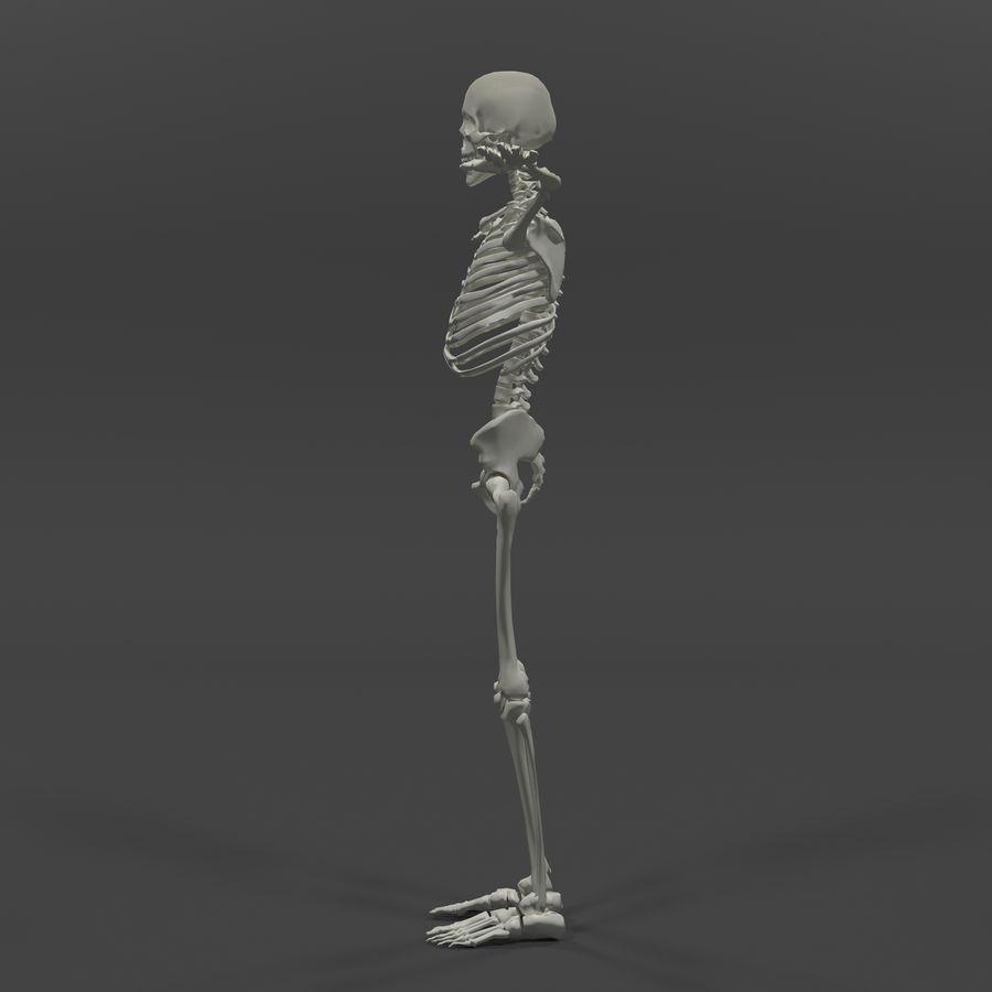 Szkielet człowieka royalty-free 3d model - Preview no. 2