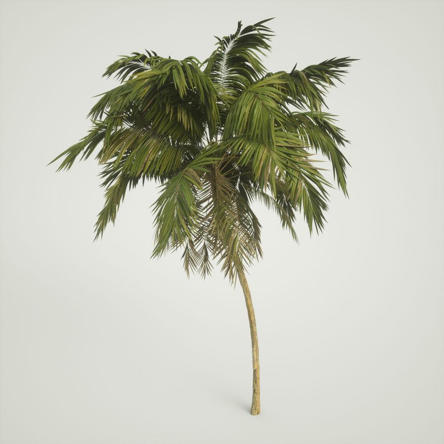 树棕榈 royalty-free 3d model - Preview no. 1