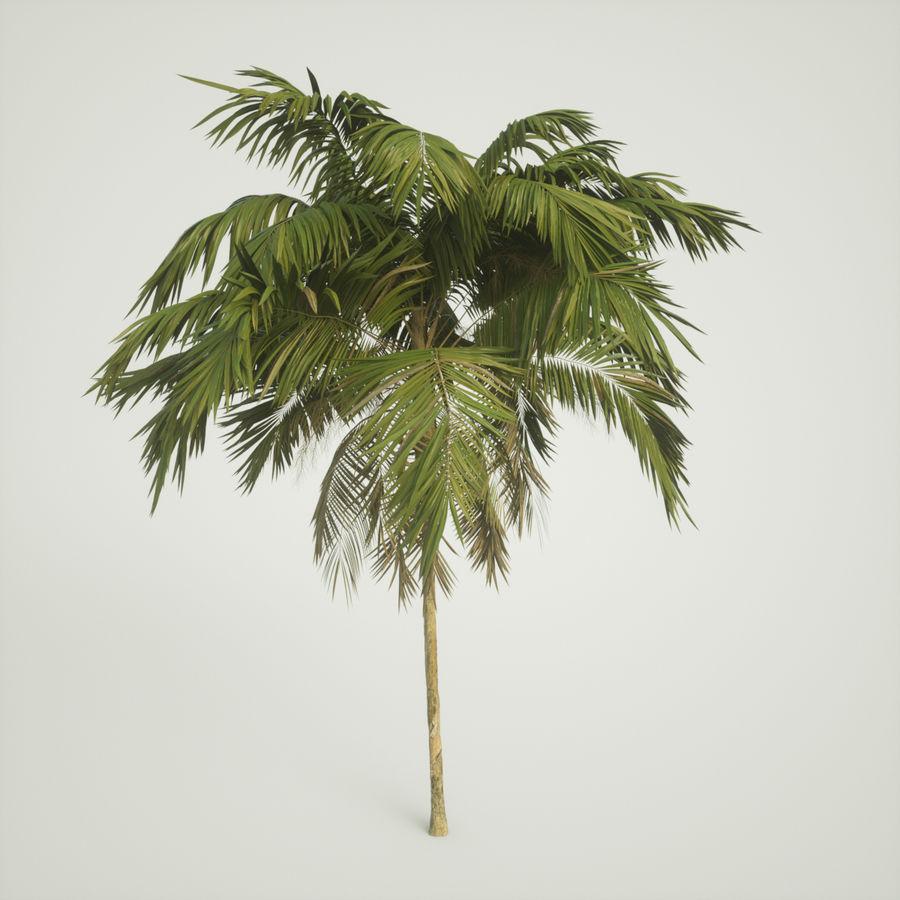 树棕榈 royalty-free 3d model - Preview no. 3