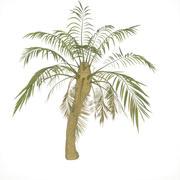 Ağaç palmiye 3d model