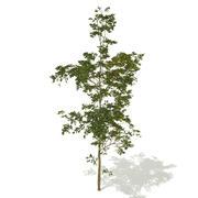 Yaz Ağacı 3d model