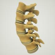 Struktura kręgosłupa lędźwiowego człowieka 3d model