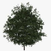 Buxus Bush Green 3d model