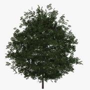 Buxus Bush Green 3d model