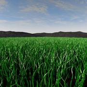 Weide landschap 3d model