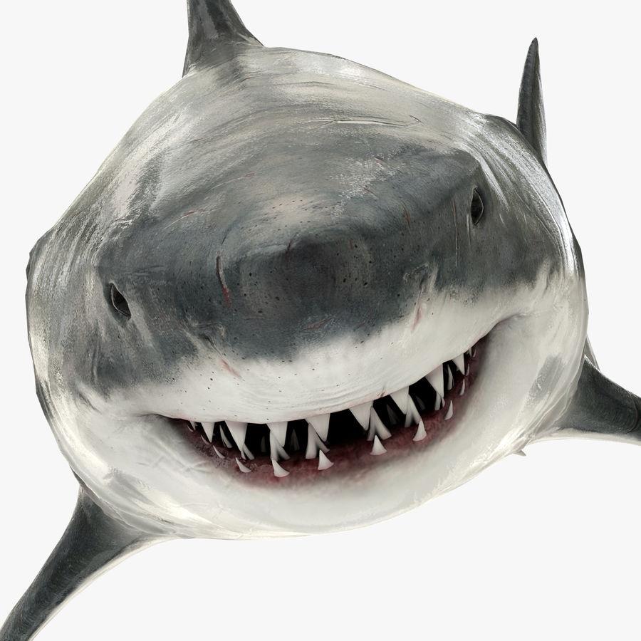 Grande squalo bianco royalty-free 3d model - Preview no. 3