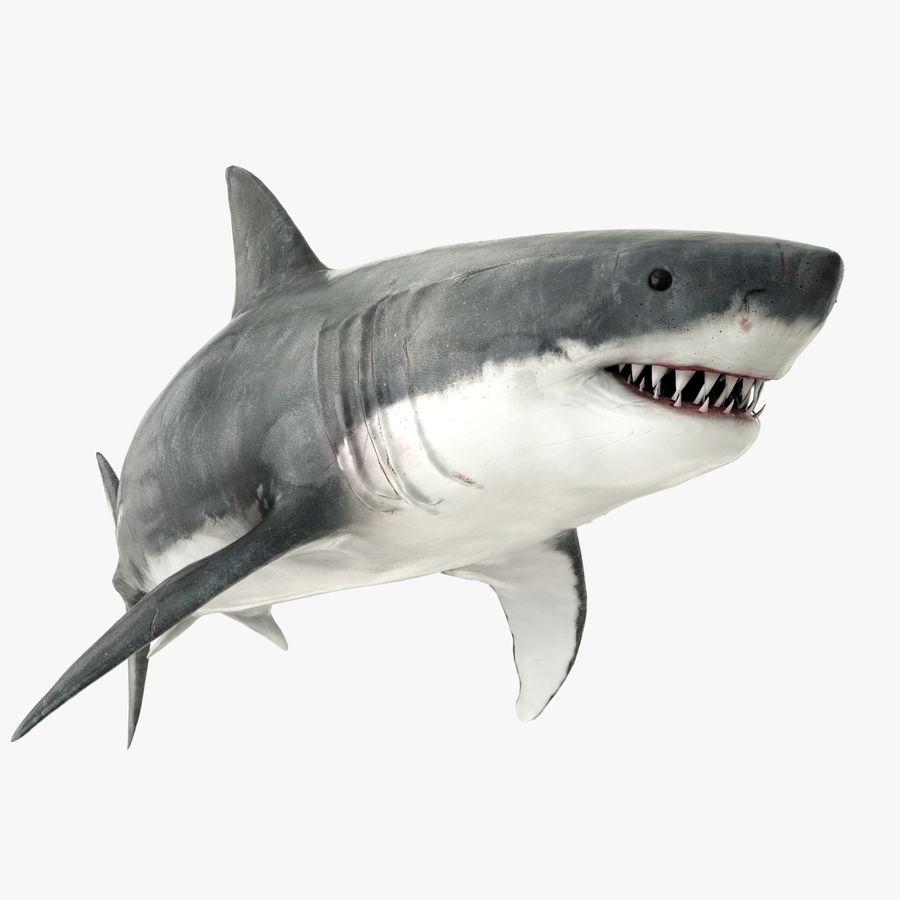 Grande squalo bianco royalty-free 3d model - Preview no. 1
