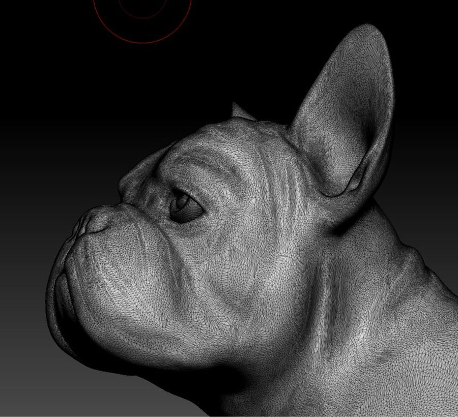 französische Bulldogge 4 royalty-free 3d model - Preview no. 8