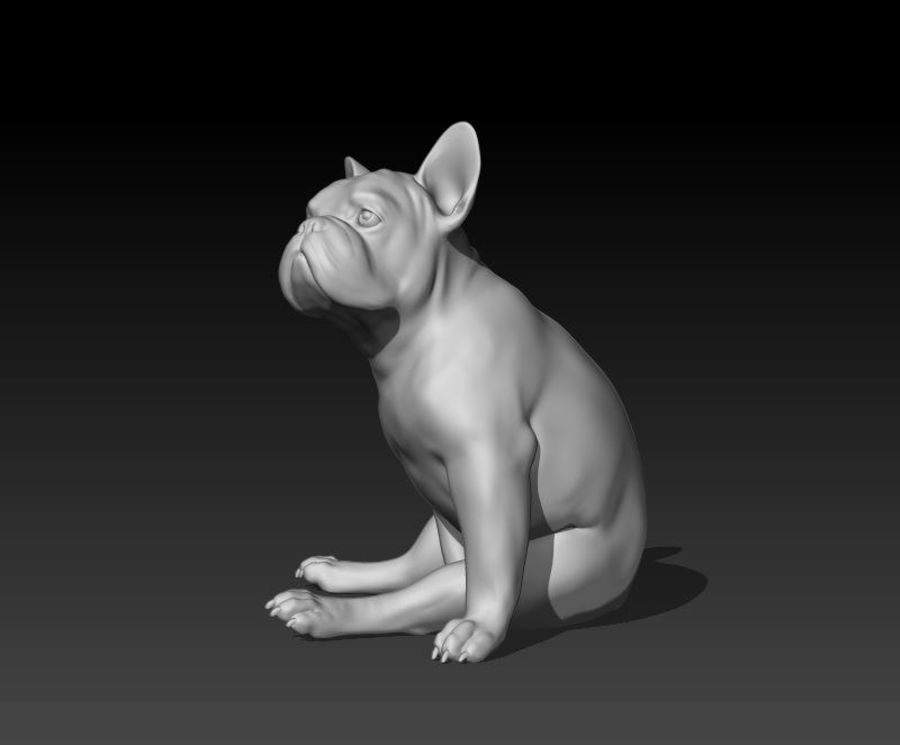 französische Bulldogge 4 royalty-free 3d model - Preview no. 5