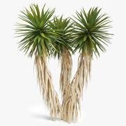 Yucca Palm 01 3d model